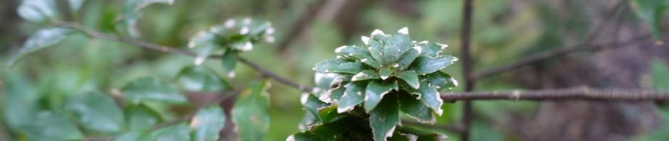 緑のブローチ