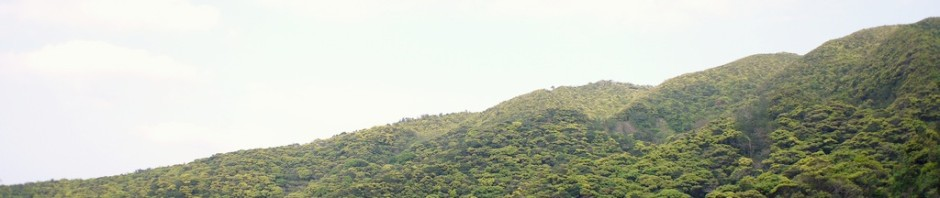森は新緑に覆われてます