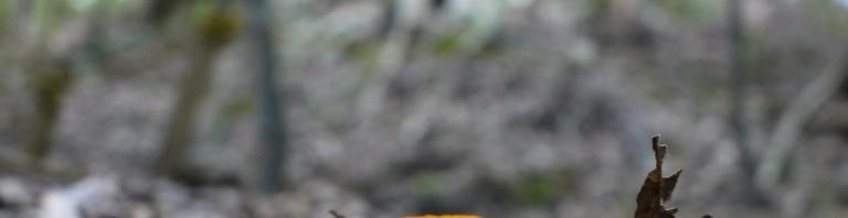 黄色いキノコ
