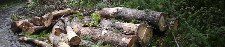 奄美中央林道、伐採作業中