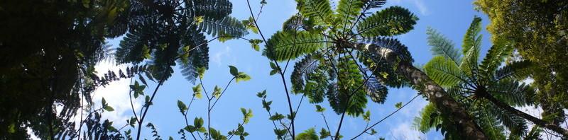 緑のチョウが飛んでるようなイヌビワの新芽