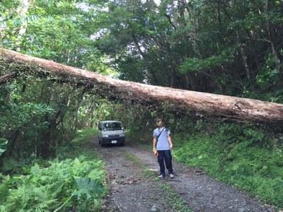 台風後の林道、やはり倒木が