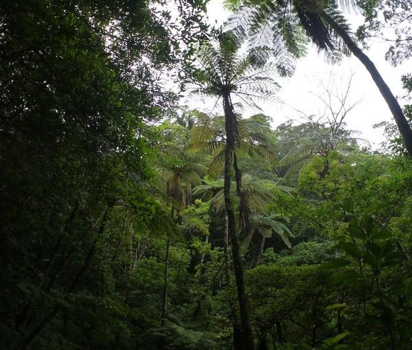 台風前の森