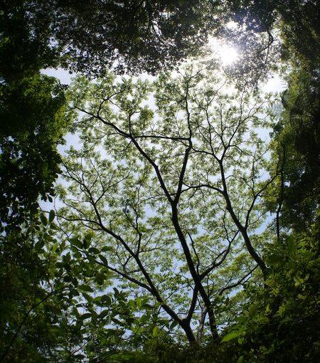 新緑から次の季節へ