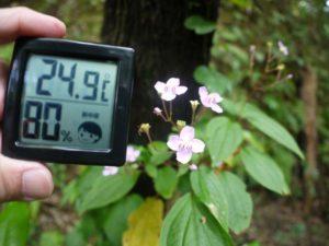 気温24.9℃、湿度80%