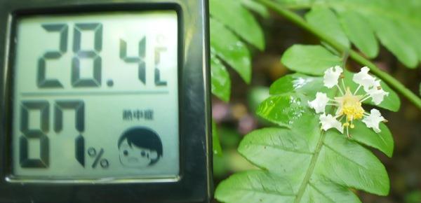 今日(8/3)11:30の森、気温28.4度に湿度87%
