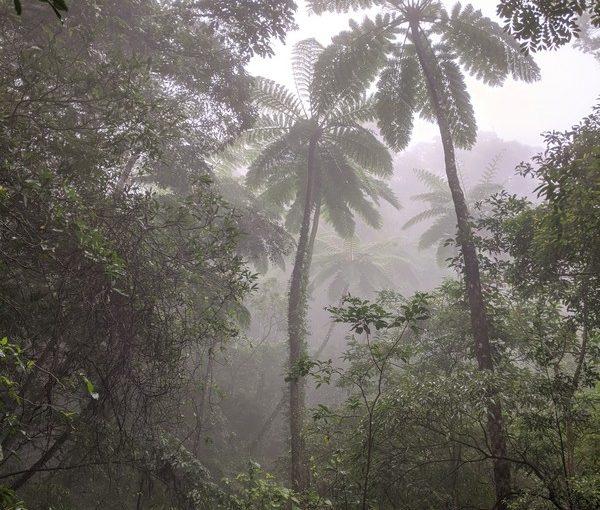 霧の中のヒカゲヘゴ