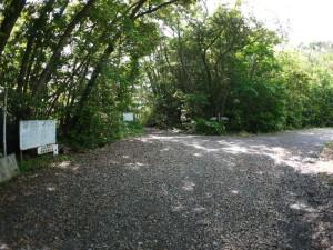原生林入口三叉路