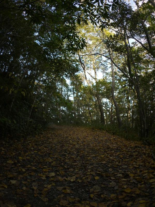 黄色い散策路